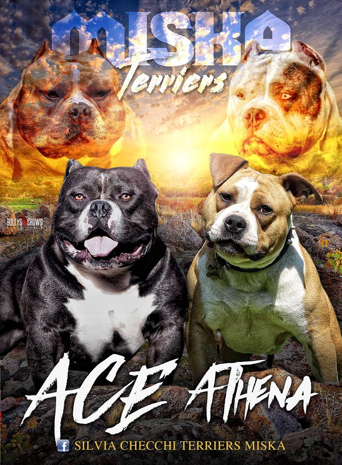 Ace X Athena