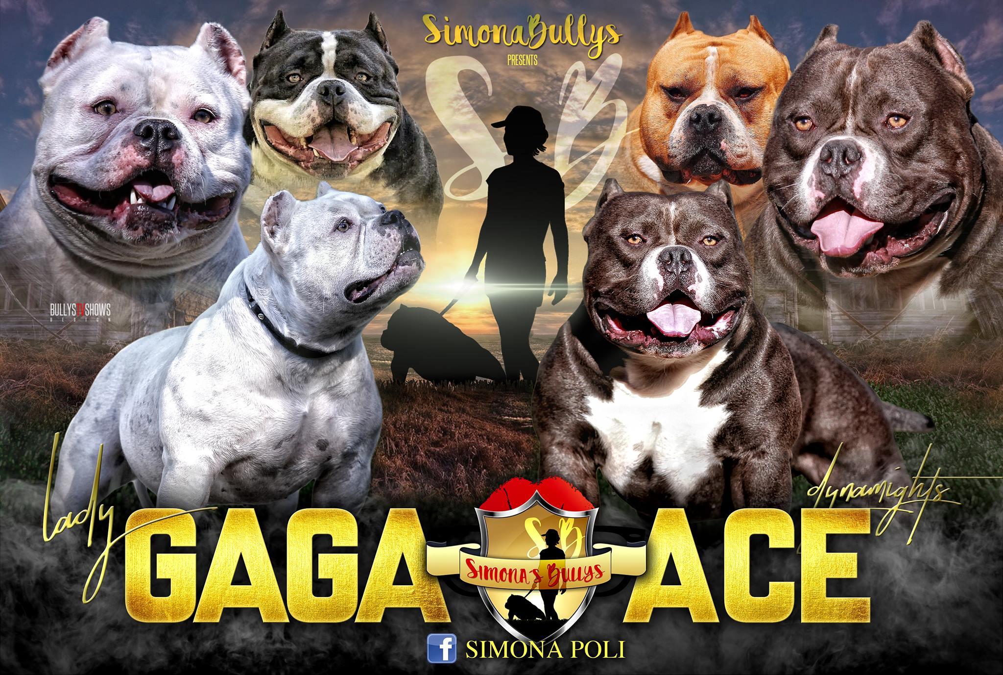 Gaga X Ace