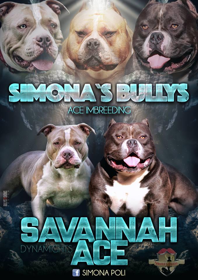 Savannah X Ace