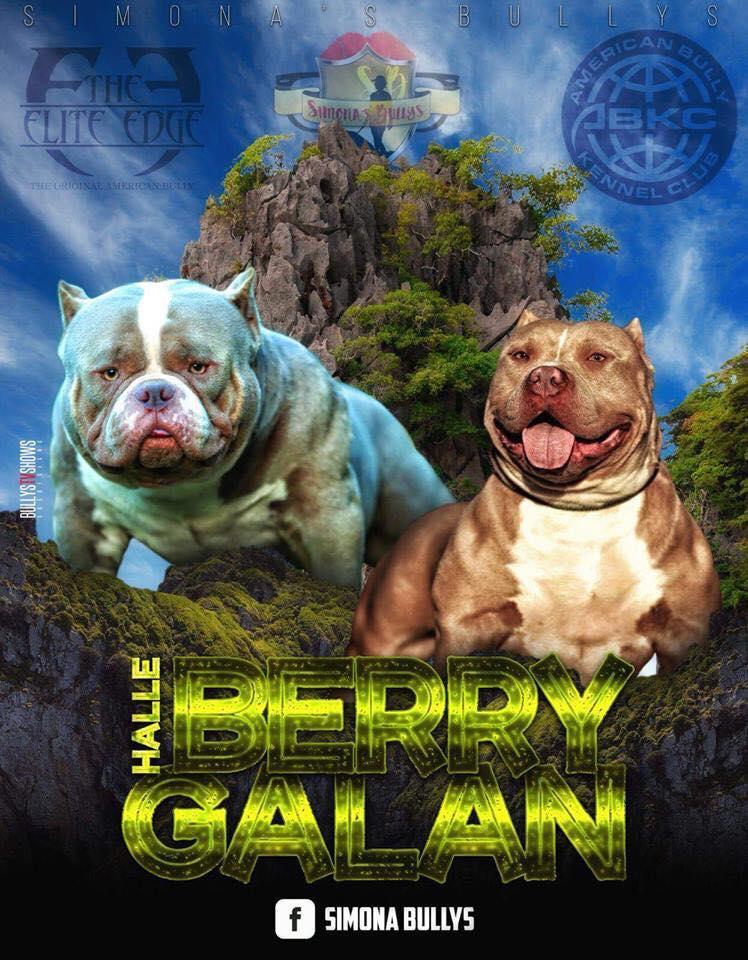 Halleberry X Galan