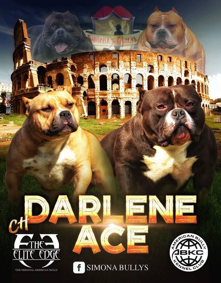 Darlene x Ace