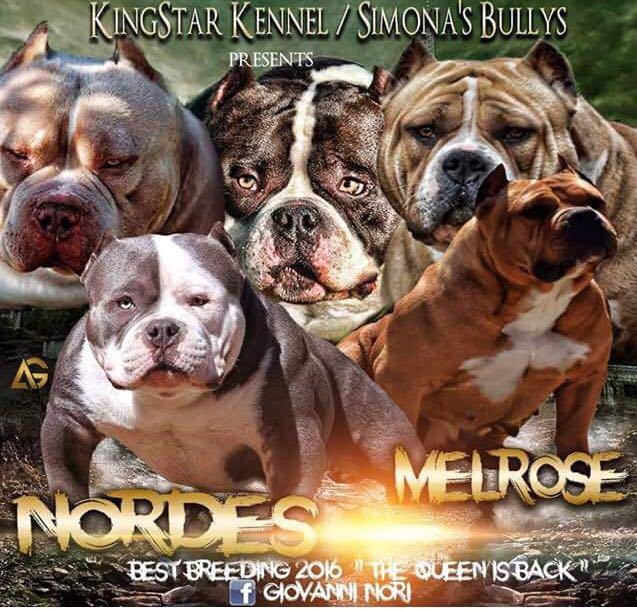 Nordes X Melrose