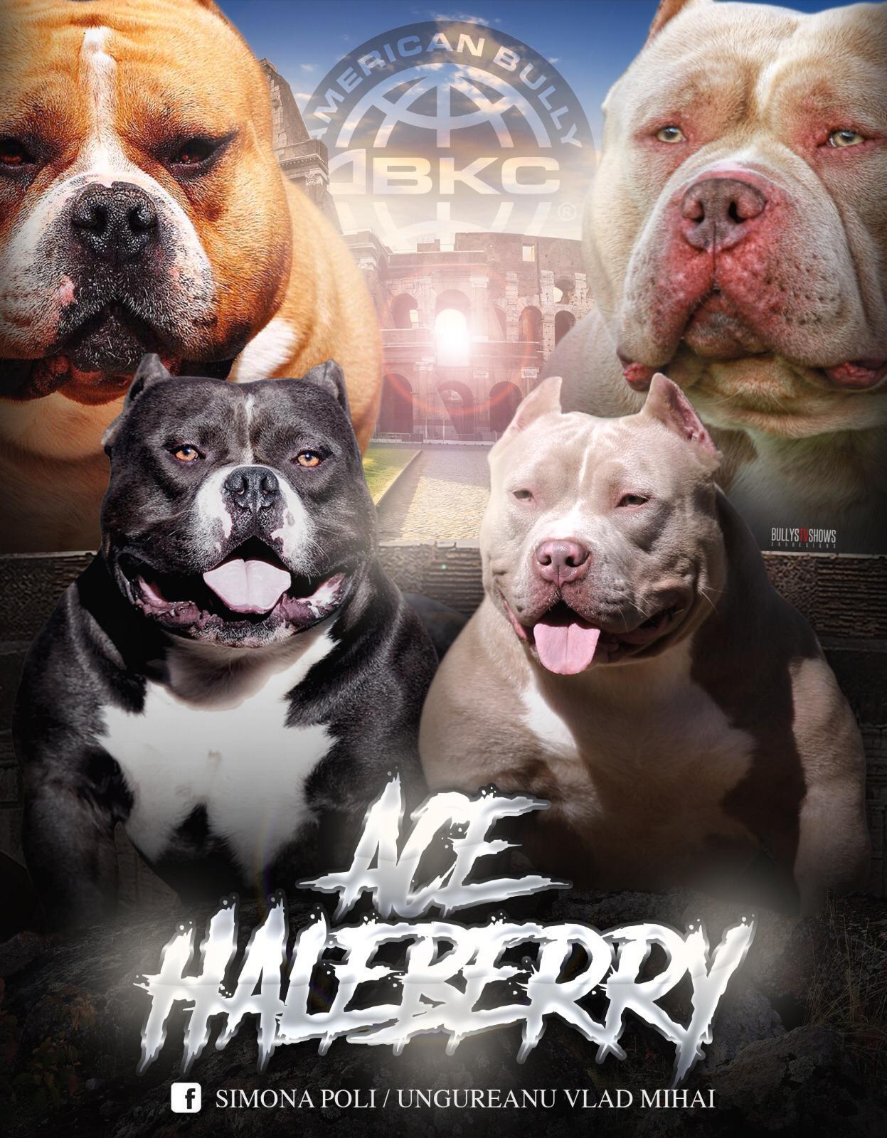 Ace X Haleberry